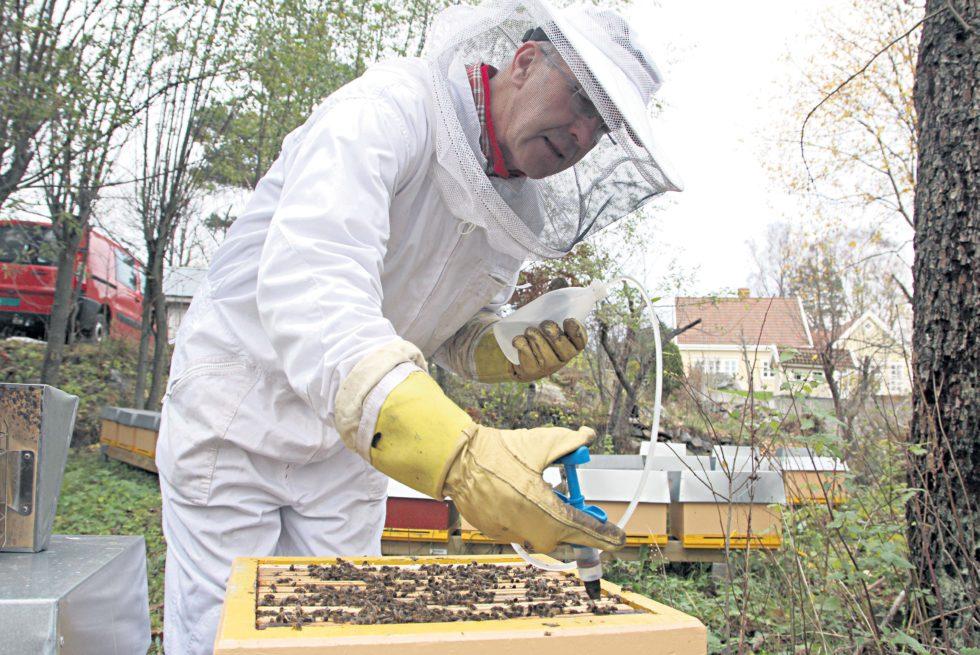 BIRØKT:Kurt Birkeland Forbereder Biene Arendals Tidende 9 For Vinteren. I Hver Av Kubene I Bakgrunnen Bor Omkring 15.000 Bier, Om Sommeren Kan Det Være Opp Til 50.000 Bier I En Kube.