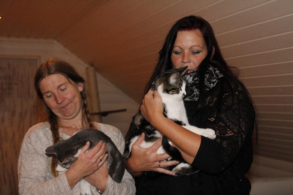 Hjemløse Katter I Hopetall