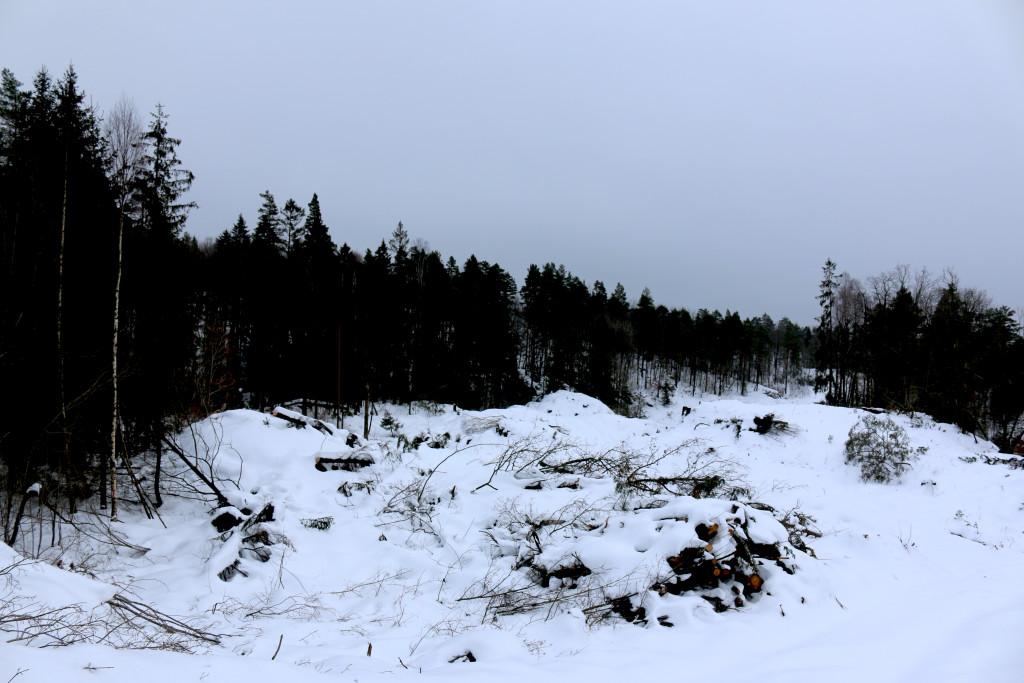 OMSTRIDT: Slik ser det ut i den omstridte traséen for tilførselsvei mellom Krøgenes og nye E18. Foto: Esben Holm Eskelund