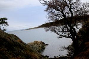 NASJONALPARK: Alve På Tromøy Er Bare Ett Av Stedene Som Blir Berørt Av Grensene Til Den Foreslåtte Nasjonalparken. Arkivfoto