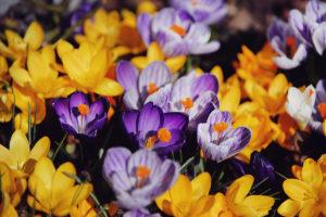 Våren 7