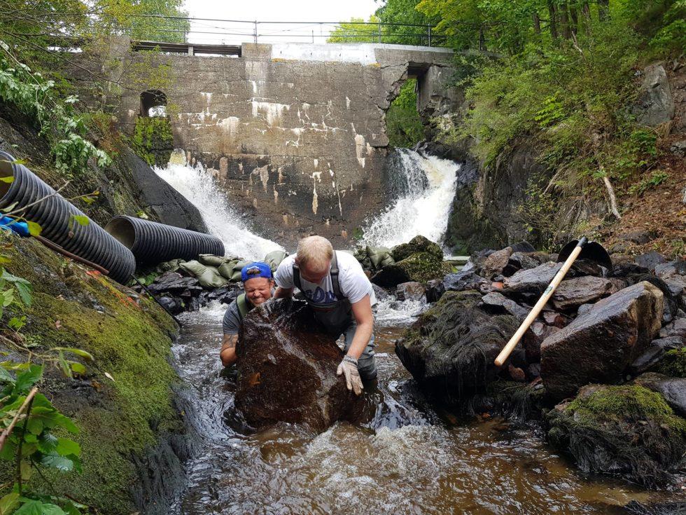 Fiskeentusiaster Bygger Laksetrapp På Dugnad