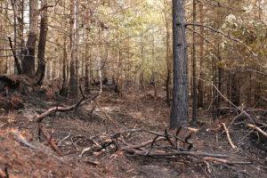 FARLIG TØRT: Brannvesenet Avverget Ny Storbrann I Mykland. Bildet Viser Området På Saltrød Hvor Det Oppsto Skogbrann Sist Helg.  Foto: Aase Kvanneid