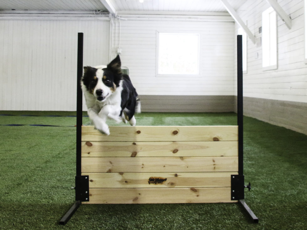 Her Er Hundenes PT-sal