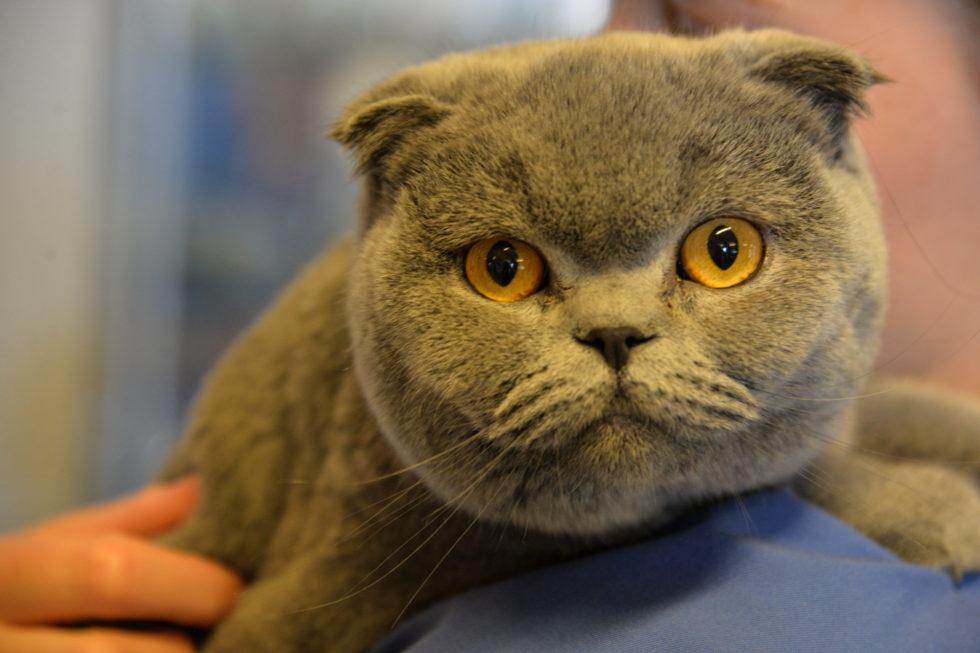Heljeprat: Hva Skal Katten Din I Ferien?