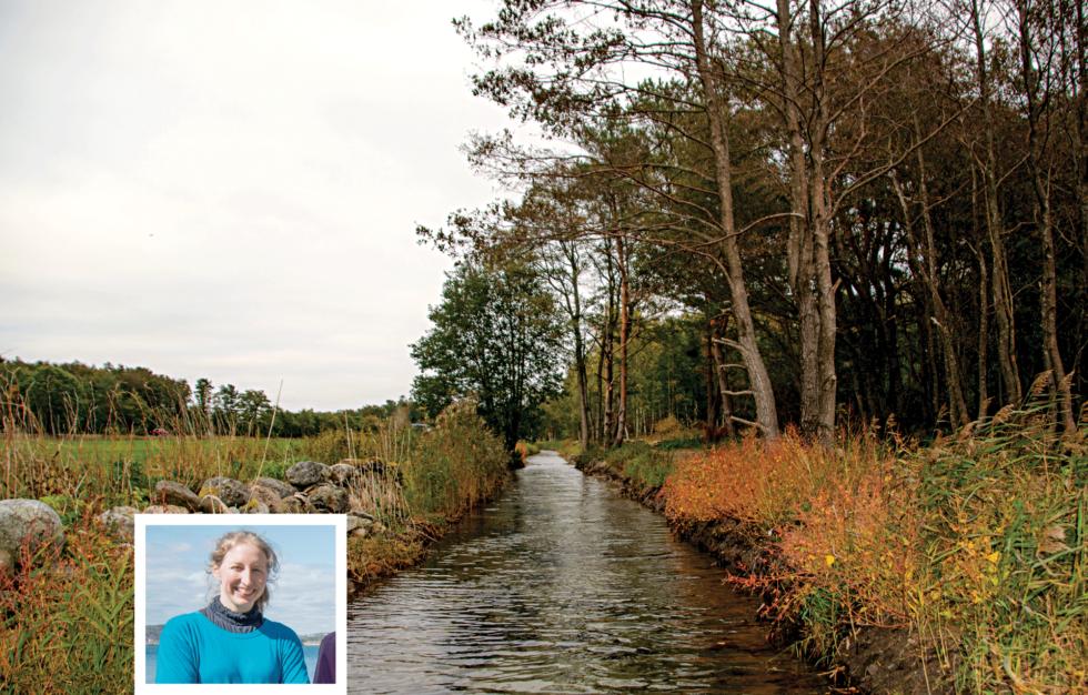 KANALEN: Rundt 300 Meter Kanal Er Gravd Opp Mellom Ruakerkilen Og Haslebukt. Nasjonalparkforvalter Jenny Marie Gulbrandsen Kan Fortelle At Det Er Observert Sjøørret I Kanalen.
